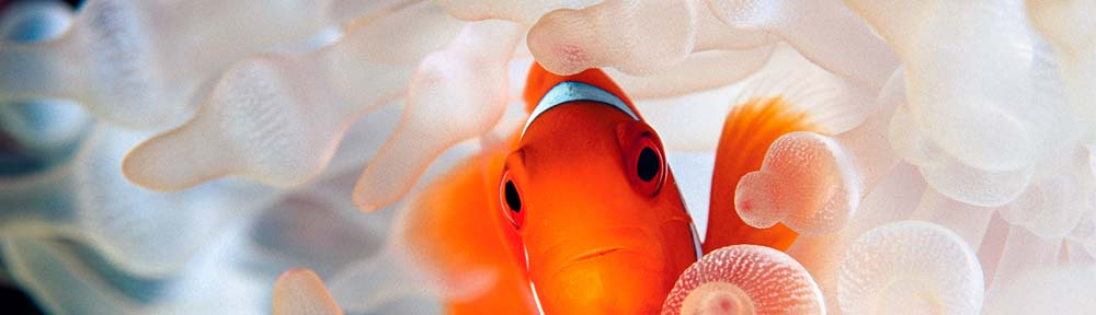july-header-fish